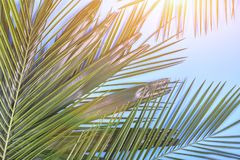 Hojas de palma tropicales en fondo azul en colores pastel entonado imagenes de archivo