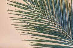 Hojas de palma tropicales en fondo en colores pastel imágenes de archivo libres de regalías