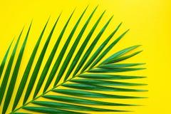 Hojas de palma tropicales en fondo del color en colores pastel Hoja de la selva Fotografía de archivo