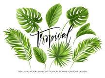 Hojas de palma tropicales fijadas aisladas en el fondo blanco Ilustración del vector stock de ilustración