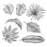Hojas de palma tropicales fijadas, ejemplo del bosquejo del vector Dé los elementos de la naturaleza tropical exhausta y del dise libre illustration