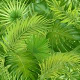 Hojas de palma tropicales, fondo inconsútil del estampado de flores del vector de la hoja de la selva libre illustration