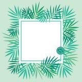 Hojas de palma tropicales fondo, plantilla Imágenes de archivo libres de regalías