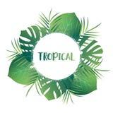 Hojas de palma tropicales Hojas exóticas del vector Plantilla tropical de la tarjeta con las hojas de la selva Foto de archivo