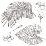 Hojas de palma tropicales Ilustración del vector Hojas grabadas de la selva stock de ilustración