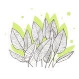 Hojas de palma tropicales Modelo del diseño Ilustración del vector Descensos verdes ilustración del vector