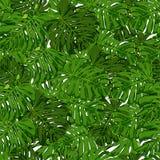 Hojas de palma tropicales para los elementos del diseño imagenes de archivo