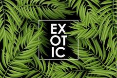 Hojas de palma tropicales Vector inconsútil Imagenes de archivo