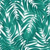 Hojas de palma tropicales Vector inconsútil Fotografía de archivo
