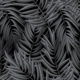 Hojas de palma tropicales Vector inconsútil Foto de archivo