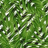 Hojas de palma tropicales Vector inconsútil Fotos de archivo