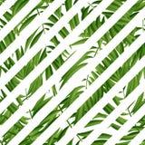Hojas de palma tropicales Vector inconsútil Foto de archivo libre de regalías
