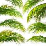 Hojas de palma Vector Imagen de archivo libre de regalías