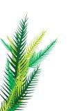 Hojas de palma - vector Imagenes de archivo
