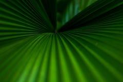 Hojas de palma verdes Imagen de archivo libre de regalías
