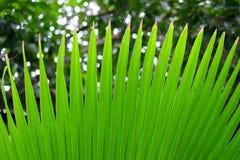 Hojas de palma verdes de la forma Foto de archivo