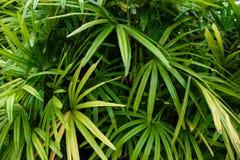 Hojas de palma verdes para el papel pintado fotos de archivo libres de regalías