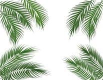 Hojas de palma verdes tropicales en cuatro lados conjunto Aislado en el fondo blanco Ilustración Fotografía de archivo
