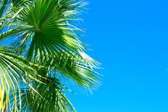 Hojas de palma y cielo azul, fondo del verano foto de archivo