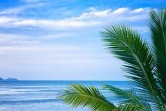 Hojas de palma y el mar Imagen de archivo libre de regalías