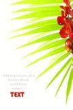 Hojas de palma y orquídea roja Imagenes de archivo