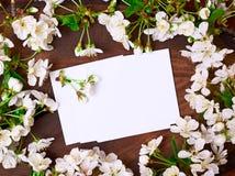Hojas de papel en blanco entre ramas florecientes de la cereza Imágenes de archivo libres de regalías