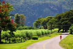 Hojas de ruta (traveler) solas en el camino Fotografía de archivo