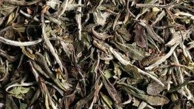 Hojas de té blancas secadas, crudas que giran cierre del fondo encima de la endecha plana de la visión desde arriba metrajes