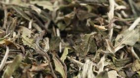 Hojas de té blancas secadas, crudas que giran sobre el cierre blanco del fondo encima de la visión almacen de metraje de vídeo