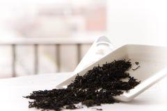 Hojas de té de la vainilla Imagen de archivo libre de regalías