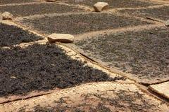 Hojas de té de sequía imagen de archivo