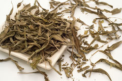 Hojas de té sabias Imágenes de archivo libres de regalías