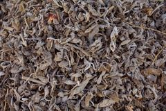 Hojas de té secadas flojas del té negro, macro foto de archivo