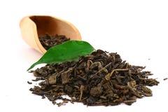 Hojas de té verdes Imagen de archivo libre de regalías