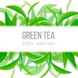 Hojas de té verdes y etiqueta horizontal de la ramita con el texto el 100 por ciento de natural Foto de archivo