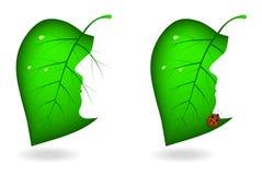 Hojas de un árbol con el corte Imagen de archivo libre de regalías