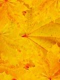 Hojas de un árbol en el otoño imagen de archivo libre de regalías