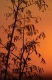 Hojas de una planta en la puesta del sol Imagenes de archivo
