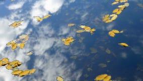 Hojas debajo del agua