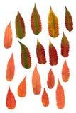 Hojas decorativas presionadas multicoloras en formas de la geometría Imagen de archivo