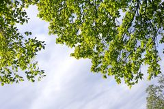 Hojas del árbol con el fondo hermoso del lago del cielo fotografía de archivo libre de regalías