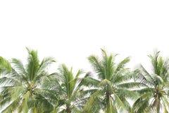 Hojas del árbol de coco aisladas fotos de archivo