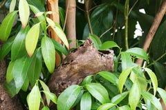Hojas del árbol del cinamomo Foto de archivo