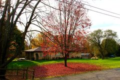 Hojas del árbol del otoño Imagenes de archivo