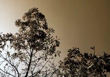 Hojas del árbol en el fondo brillante del cielo Imágenes de archivo libres de regalías