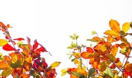 Hojas del árbol para la imagen de fondo Foto de archivo