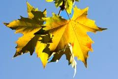 Hojas del árbol plano Imagen de archivo libre de regalías