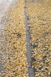 Hojas del abedul amarillo en calle Fotos de archivo libres de regalías