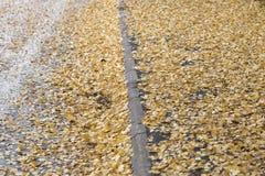 Hojas del abedul amarillo en calle Foto de archivo