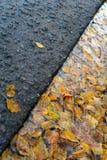 Hojas del abedul amarillo en charco cerca del camino Imágenes de archivo libres de regalías
